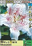 """Lilium - Orientalische Lilie """" Muscadet """""""