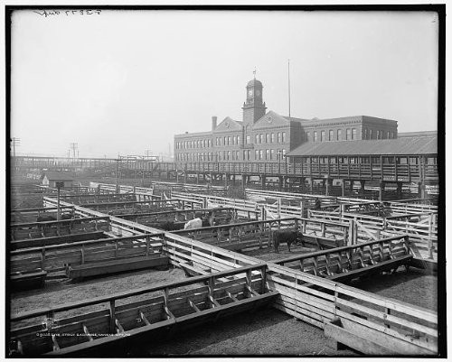 Photo: Livestock exchange,industrial facilities,animals,Kansas City,Missouri,MO,c1906