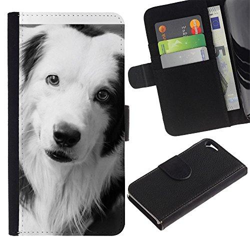 TaiTech / Housse Coque étui Etui en cuir - Border Collie Black Dog Breed White - Apple Iphone 5 / 5S