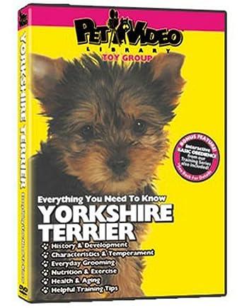 Amazon Com Yorkshire Terrier Dvd Dog Puppy Training Bonus Pet