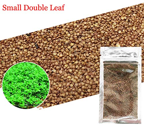 Live Fish Tank Aquarium Plant - Aquarium Grass Plants Seeds,Aquatic Double Leaf Carpet Water Grass,Oxygenating Weed Live Pond Plant Seeds,Fish Aquatic Water Grass Decor,Easy to Plant Grow Maintain (Green-S D L)