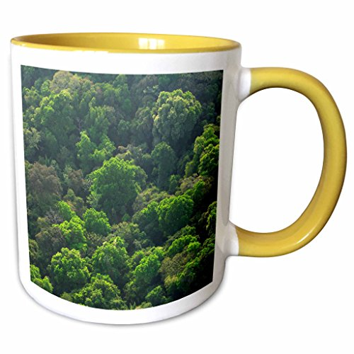 3dRose Danita Delimont - Forests - Forest in Panama Canal Zone, Panama - SA15 CZI0589 - Christian Ziegler - 11oz Two-Tone Yellow Mug (mug_86917_8)