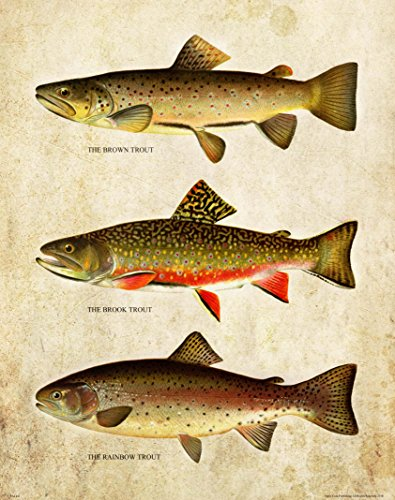 Fly Art Fishing (Apple Creek Brown Brook Rainbow Trout Unlimited Art Print 11x14 Vintage Fly Fishing Lures Wall Decor Pictures)