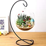 Lykis(TM) DIY Hydroponic Plant Flower Hanging Glass Vase Container Home Garden Decor Worldwide Store
