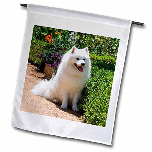 3dRose fl_88781_1 American Eskimo Dog US05 Zmu0082 Zandria Muench Beraldo Garden Flag, 12 by 18-Inch (American Eskimo Designs)
