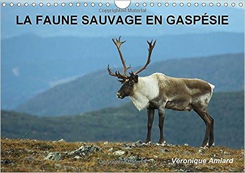 Livre gratuits en ligne LA Faune Sauvage En Gaspesie: Bienvenue Dans Le Monde Des Animaux Sauvages Peuplant Un Pays De Reve ! pdf, epub