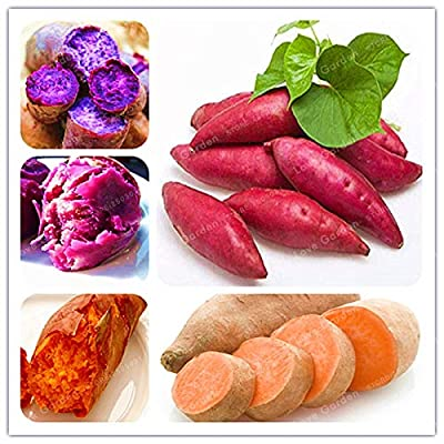 20pcs/Bag Sweet Potato Bonsai Vegetables Bonsai Fresh Food Fruit and Vegetable Garden Supplies Bonsai Plant for Home Garden