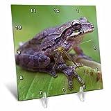 3dRose Danita Delimont - Frogs - Common Mexican tree frog, Baudini smilisca, Costa Rica - 6x6 Desk Clock (dc_258574_1)