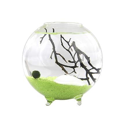 Amazon Com Nw Wholesaler Marimo Ball Glass Orb Terrarium With