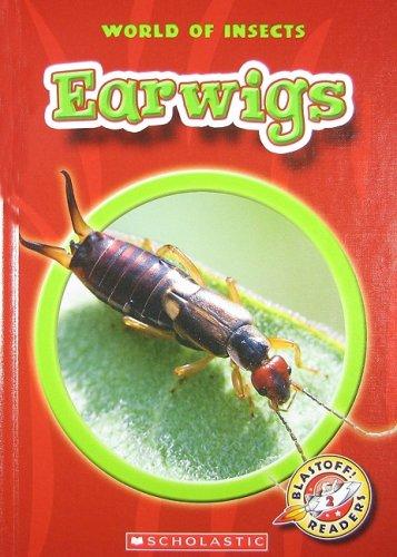 Earwigs - 4