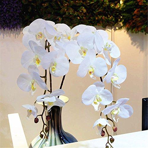 Flower Phalaenopsis Orchid (Mynse 6 Pieces 42.5