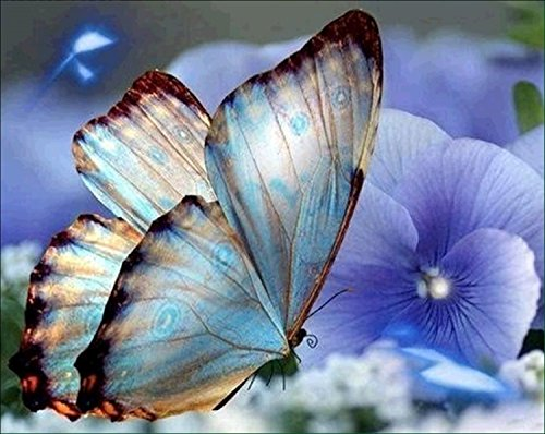 DIY 5D Diamond Painting by Number Kits, Beautiful Butterfly Embroidery Painting Cross Stitch Arts Craft Canvas Wall Decor 9.8 x 11.8 inch