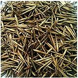 Semi bambù Moso Phyllostachys edulis (25)