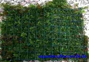 3 Alfombras de musgo de java con Rejilla 15x10 cm, Javamoos