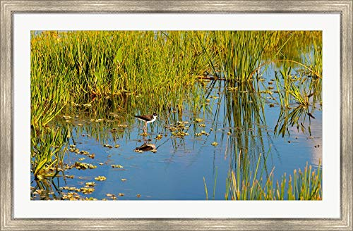 Reflection of a Bird on Water, Boynton Beach, Florida, USA by Panoramic Images Framed Art Print Wall Picture, Silver Scoop Frame, 47 x 31 ()