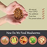WAMSOFT Non-GMO Dried Mealworms,2LB 100% Natural