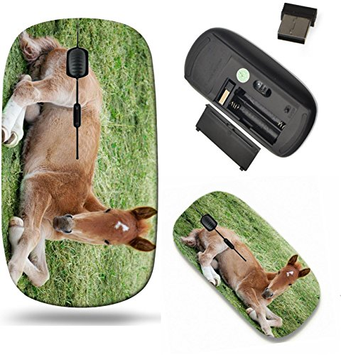 (Liili Wireless Mouse Travel 2.4G Wireless Mice with USB Receiver, Click with 1000 DPI for notebook, pc, laptop, computer, mac book Little foal lying on green grass IMAGE ID 951825 )