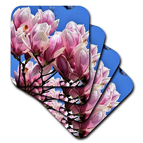 (3dRose Sven Herkenrath Flower - Pink Magnolia Flower Blossom with Blue Background - set of 4 Ceramic Tile Coasters (cst_311454_3))