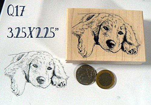 Q17 Golden retriever dog Larger rubber stamp Retriever Dog Stamp