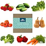 Vegetable Seed Variety Pack for Planting on Your Patio or Urban Garden - Tomato, Bell Pepper, Lettuce, Squash, Cucumber…