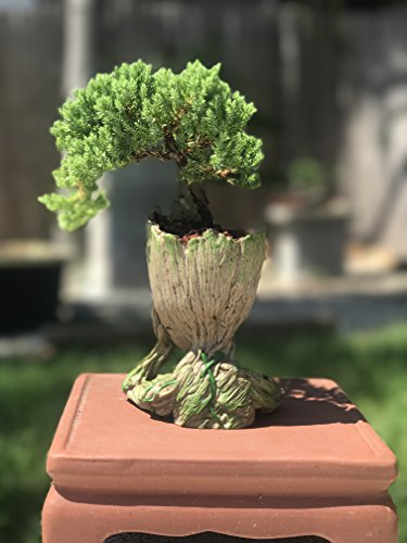 Cactus Pot Pen Hol Thinking Groot Bonsai Tree Pot Baby Groot Succulent Pot Wealthitglobal Com
