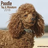 Poodle (Toy & Miniature) Calendar - Dog Breed Calendars - 2017 - 2018 wall Calendars - 16 Month by Avonside