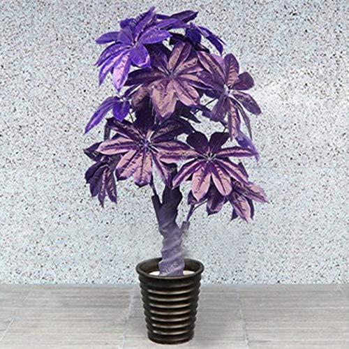 Amazon.com: 5 piezas de semillas de árboles pequeños, bonsai ...