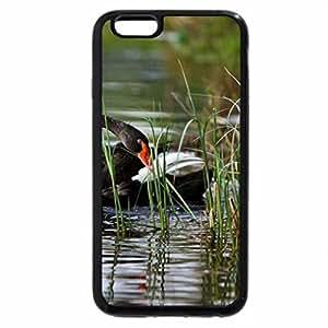 iPhone 6S / iPhone 6 Case (Black) Beautiful Black Swans