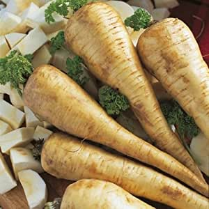 Kings Seeds - Parsnip Tender and True - 800 Seeds