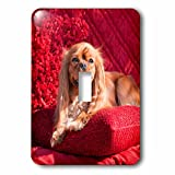 3dRose Danita Delimont - Dogs - Cavalier lying on red pillow, MR - Light Switch Covers - single toggle switch (lsp_258255_1)