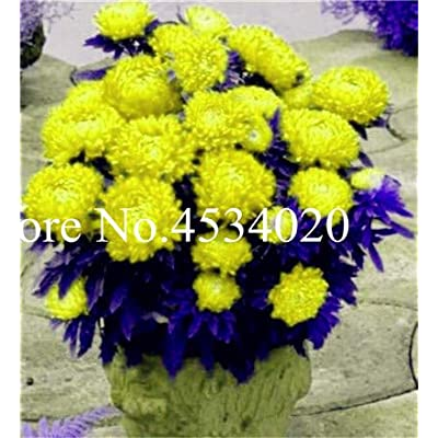 Kasuki 100 pcs Chinese Aster Bonsai (Callistephus) give You a Garden Full of Bright Summer Big Flowers Orginal Package - (Color: 16): Garden & Outdoor