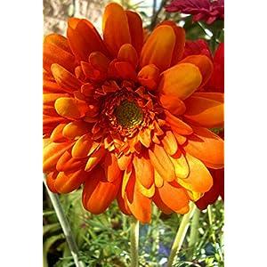 One Dozen Orange Silk Gerbera Daisy Flowers - Excellent Home Decor - Outdoor Indoor 101