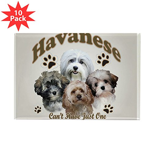 - CafePress - Havanese Cant Have Just One Mousepad Magnets - Rectangle Magnet, 2