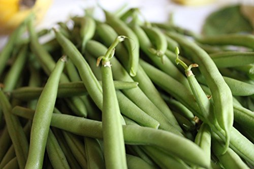 Bush bean Kentucky Wonder 50 seeds * Heirloom * Non GMO * (Kentucky Beans Bush Wonder)