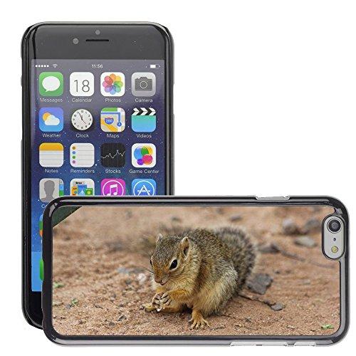 """Bild Hart Handy Schwarz Schutz Case Cover Schale Etui // M00134495 Squirrel Afrika Tansania Tarangire // Apple iPhone 6 PLUS 5.5"""""""