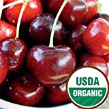 Starking Hardy Giant Antique Organic Sweet Cherry Semi-Dwarf - Ships 3-4' Tall and/or with a 3/8'' or Larger Trunk Diameter.