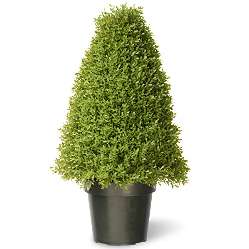 National Tree Boxwood Tree with Dark Green Plastic Pot, 30-Inch