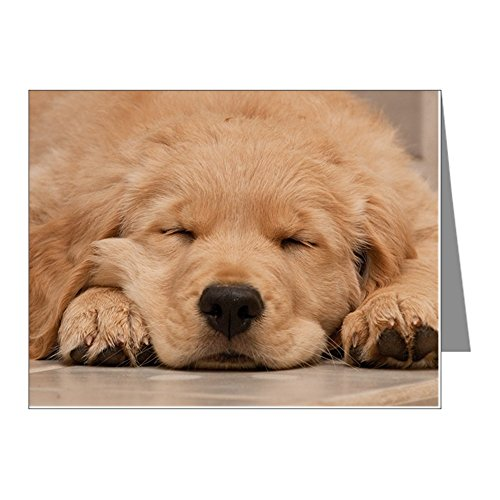 CafePress - Golden Retriever Puppy - Blank Note Cards (Pack of 20) Matte ()