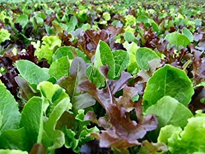 Lettuce Seed Loose Leaf Mix By Stonysoil Seed Company