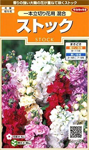 サカタのタネ 実咲花7241 ストック 一本立切花用混合 00907241