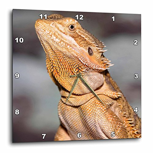 - 3dRose 3D Rose Bearded Dragon, Pogona vitticeps, Lizard, Reptile - NA02 AJE0365 - Adam Jones - Wall Clock, 10-inch (DPP_83645_1)