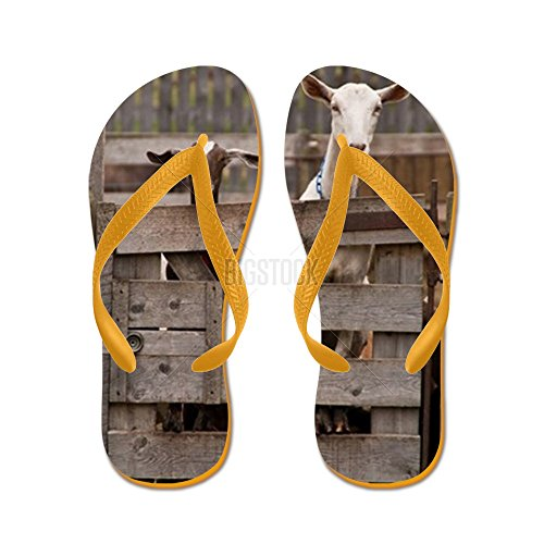 Cafepress A Brown And A White Goat Stare Over At - Chanclas, Sandalias Thong Divertidas, Sandalias De Playa