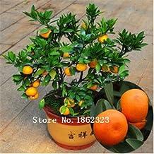 50pcs Edible Fruit seeds Mandarin Bonsai Tree Seeds, Citrus Bonsai Mandarin Orange Seeds