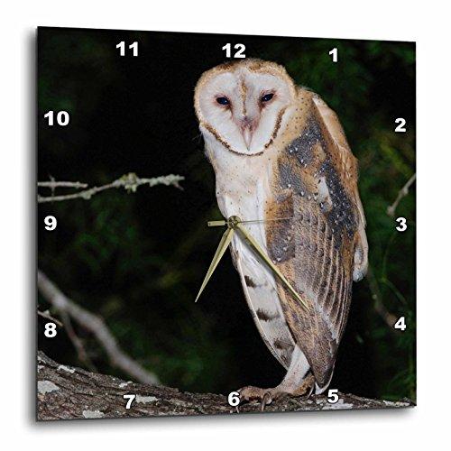 3dRose dpp_84403_1 Barn Owl, Rio Grande Valley, Texas, USA-Na02 Rnu0358-Rolf Nussbaumer-Wall Clock, 10 by - Rio Grande Outlets
