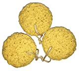 Exfoliating Foam Sea Sponge 5 Inch (Pack of 3) Natural Feel