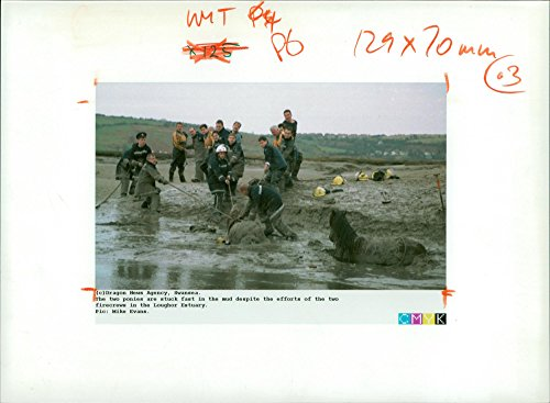 se Animal,Mudflats become a pony trap. ()