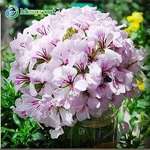 ¡Promoción! 20 Semillas Semillas PC geranio perenne de flores Semillas Pelargonium Peltatum para Instalaciones Interiores de 18 colores disponibles