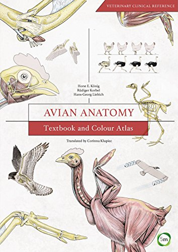 Avian Anatomy: Textbook And Colour Atlas (Second Edition)