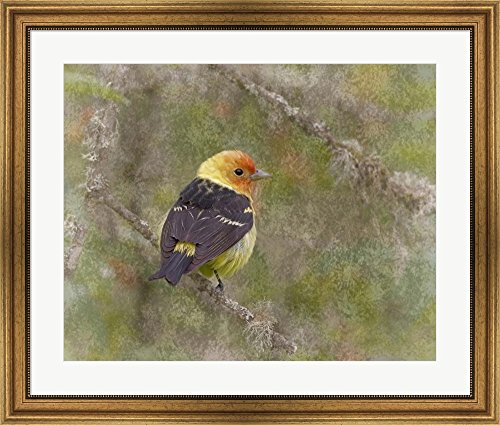 Great Art Now Western Tanager by Larry McFerrin Framed Art Print Wall Picture, Wide Gold Frame, 33 x 28 inches