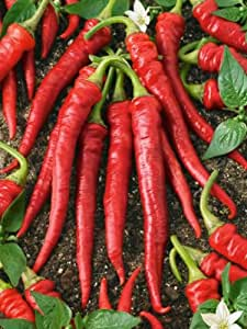 Pepper- Cayenne Red- 100 Seeds - 50 % off sale